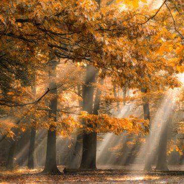 autumn_lights_