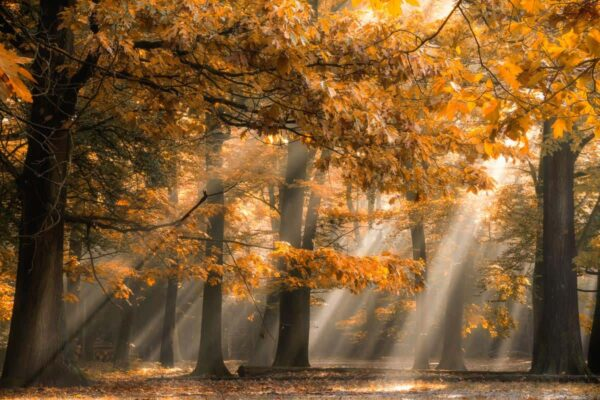 autumn_lights_