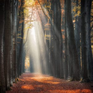 autumn path with intense light rays