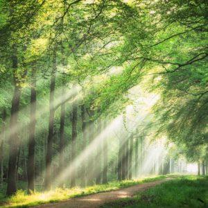 spring light rays