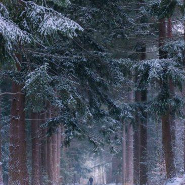 landschap-breda-winter-2019-1