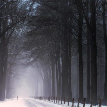 landschap-breda-winter-2019-2