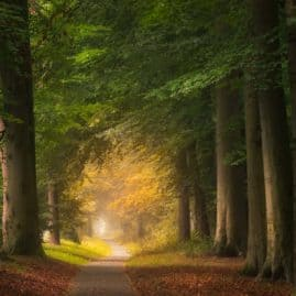 Towards autumn forest photography