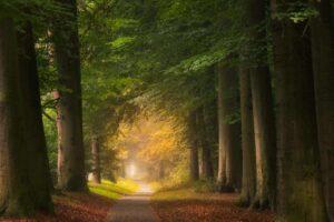 Towards autumn forest photography