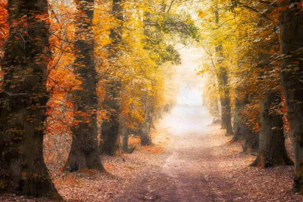 Colorful and simple-forest-autumn