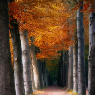 The orange path
