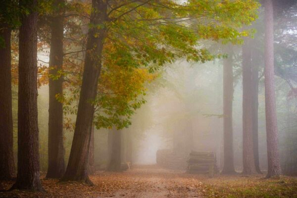 the misty forest path