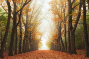 Mystery path in autumn