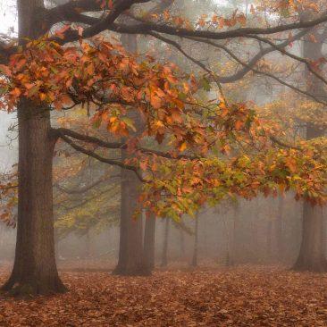 Autumn mist fotografie