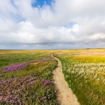 Texel path through the dunes
