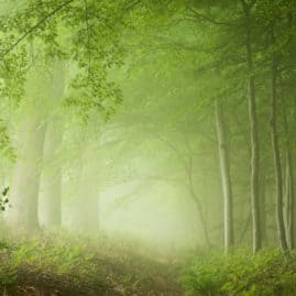 green mood landscape photography