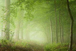 green mood landscape photography