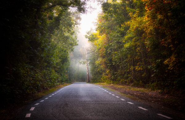 the unknown forest road by photoscapeart