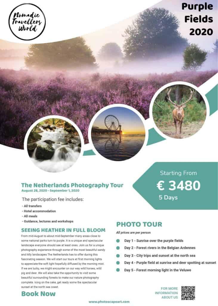 Purple-Fields-netherlands-tour-2020