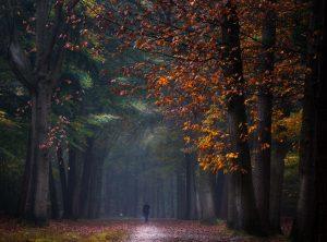 Walking into Wonderland